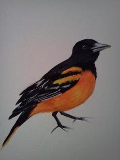 You're a Bird. (close up) 2012. 14x18