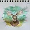 Maine Moose. 5x7 watercolor