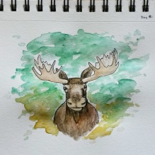 Maine Moose. 5x7 watercolor